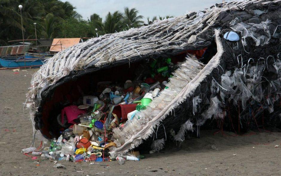 green peace balena rifiuti